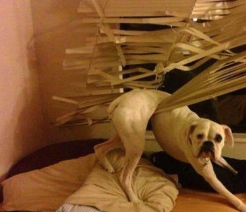 dog-stuck-0